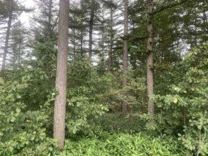 なぜ立木を買取しているの?