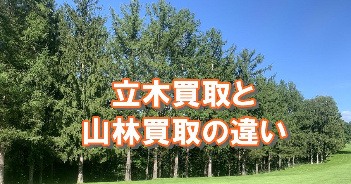 立木買取と山林買取の違い、丸太を供給してます