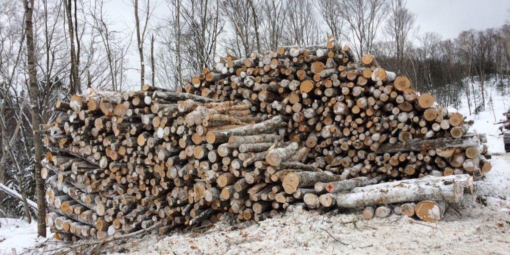 立木伐採して丸太にします。