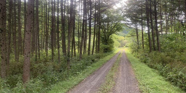 林業経営を考えるなら、林内道路設計を適切に計画し、こまめに整備することが大切です。