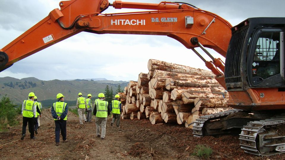 立木の伐採収穫は林業経営に必要