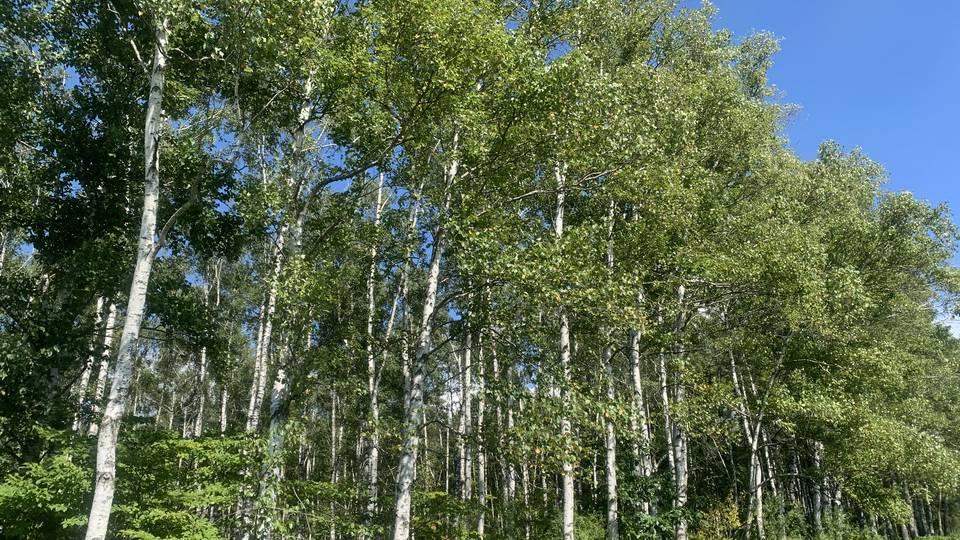立木買取としての主な対象は、大まかに「針葉樹」と「広葉樹」に分かれています。