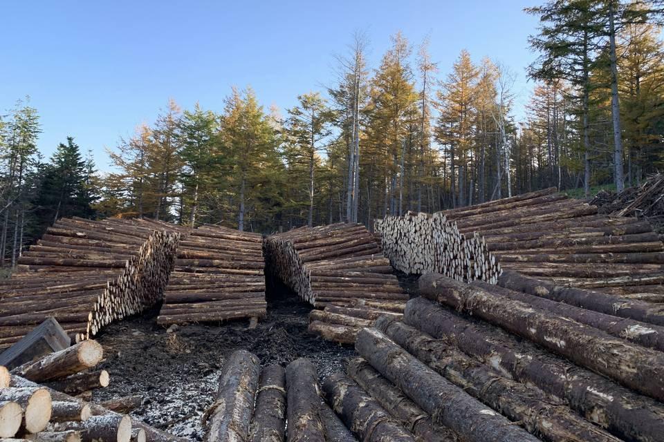 放置されてきた山林でも条件さえ揃えば、高価な立木となり山林価値が上がる可能性もあります。