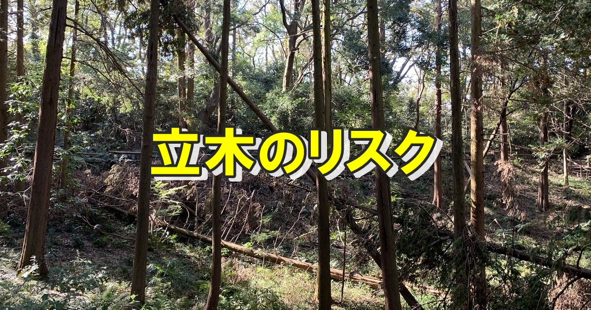 山林所有者が考えるべき立木のリスク