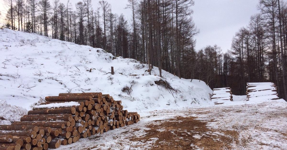 足寄事業所では1961年から国有林、北海道有林をはじめ公有林や、個人法人山林所有者の方から立木買取いたしております。