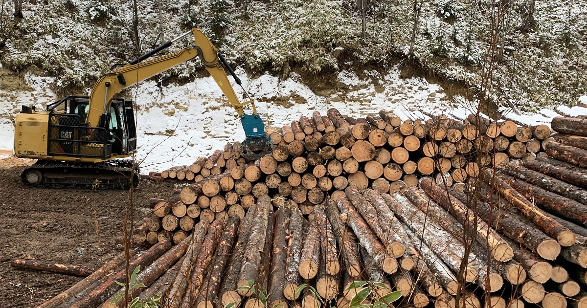 公有林や、個人、法人の山林所有者から立木を買取いたしております。