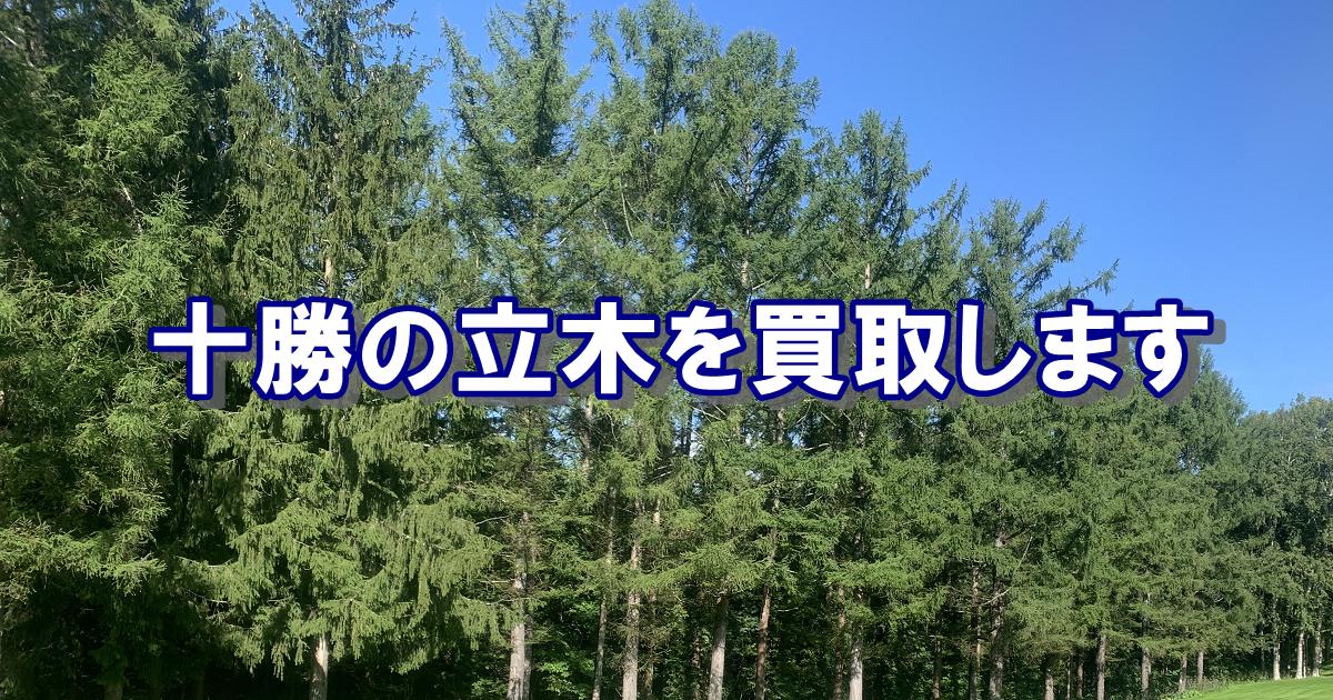 北海道十勝の立木を買取しております。