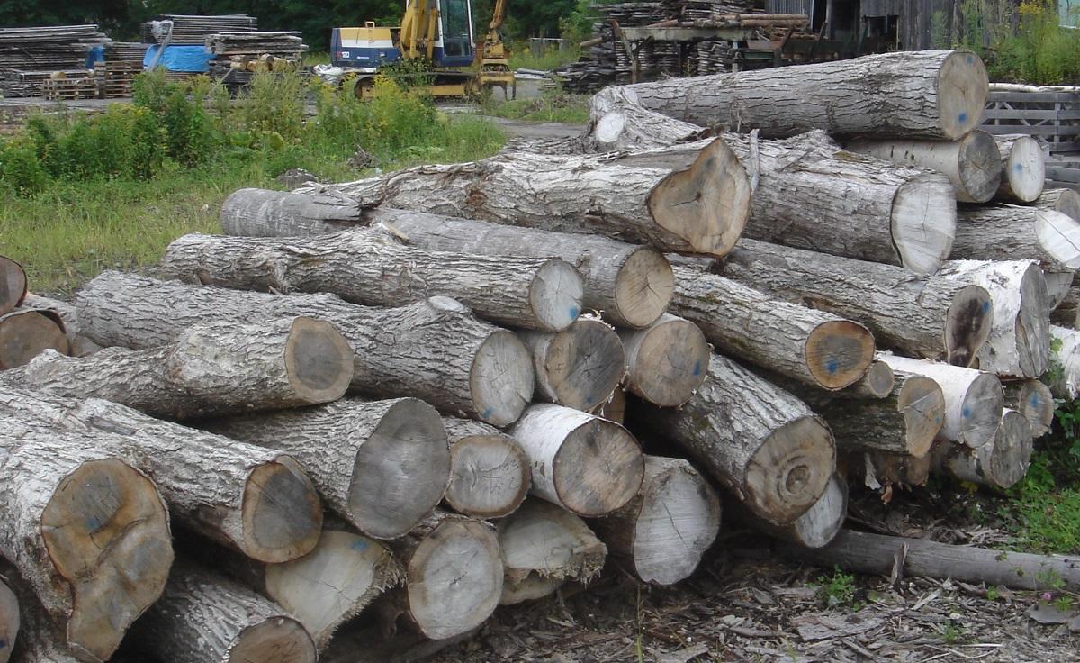 腐っていたり、曲がりやねじれや二股になった木、細い木も必ずあるので、それらの使い道も確保する必要があります。
