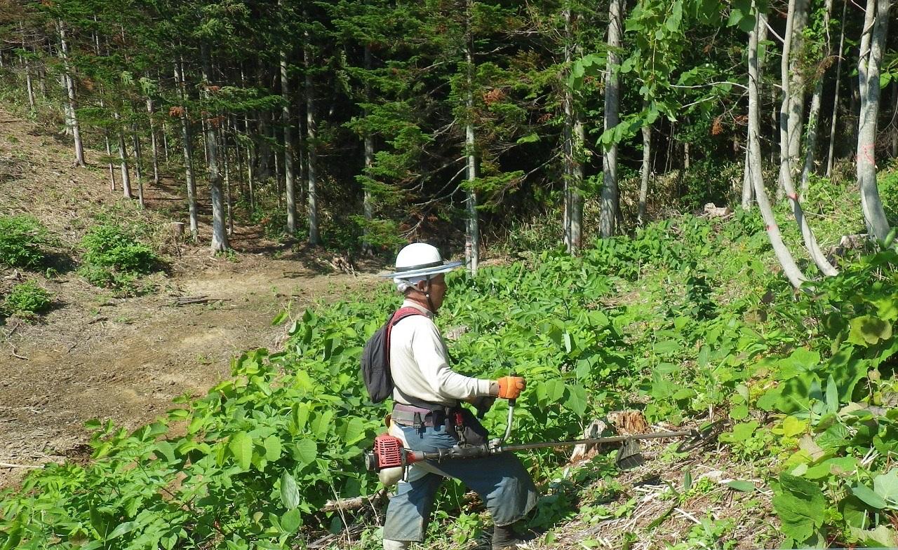 植林したからには、育林して伐採まで人の手が必要なのです。