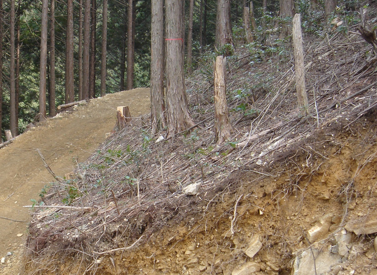 私たちが現場で見てて、崩れるな…と感じる植林地も実際にあり、そこでは立木を残します。