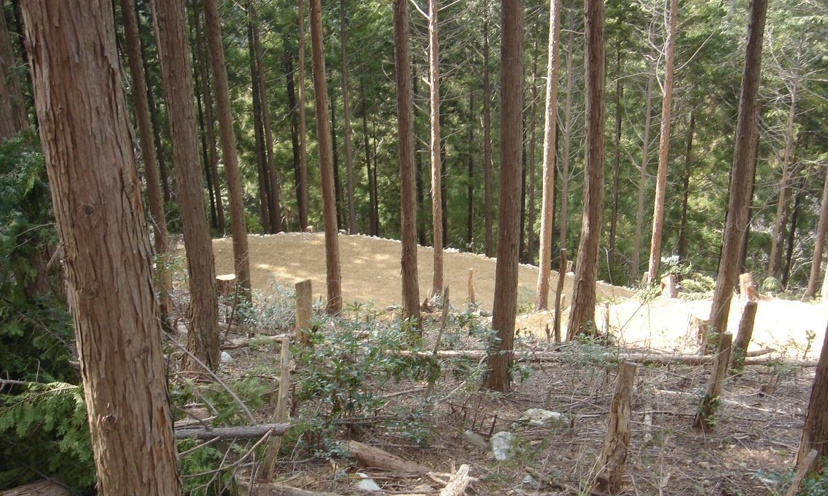 難しい国内の林業経営