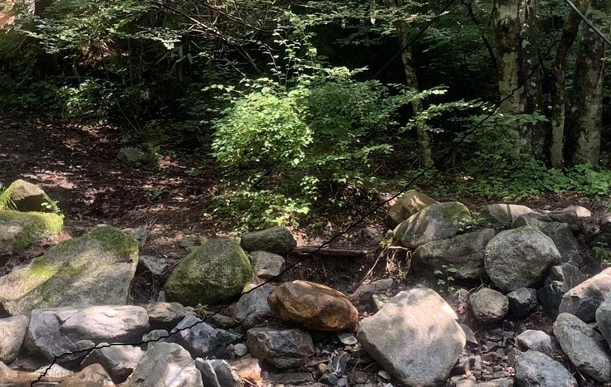アカエゾマツはトドマツと同じく岩盤質地帯、急傾斜地では、樹芯の欠点や心腐れが多い。