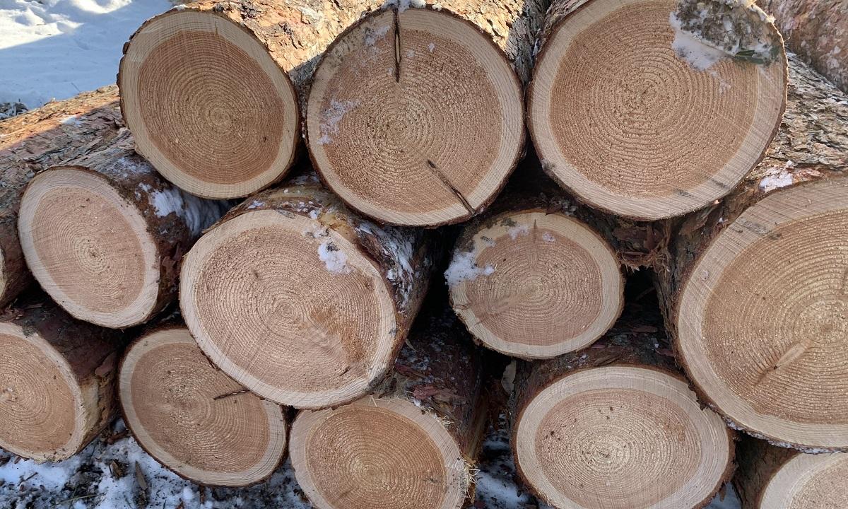 カラマツの場合は日当たりが重要で、しっかり日が入れば北向きの斜面の立木もよく育ち、急斜面でも良材が収穫できるとされています。