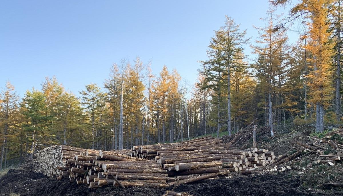 林業は植林して育成し価値ある立木に育ててから伐採し原木丸太として販売するのが目的です。