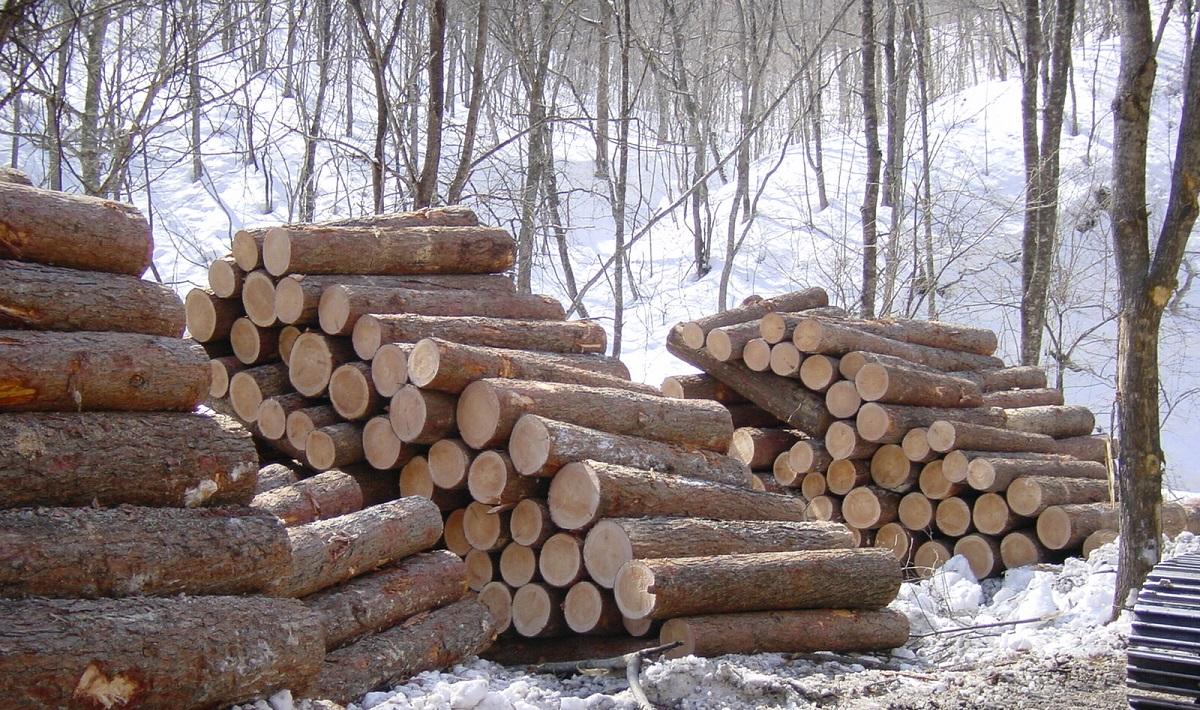 経済林の成績が良い悪いというのは「植林から伐採販売」までで稼げたかどうか