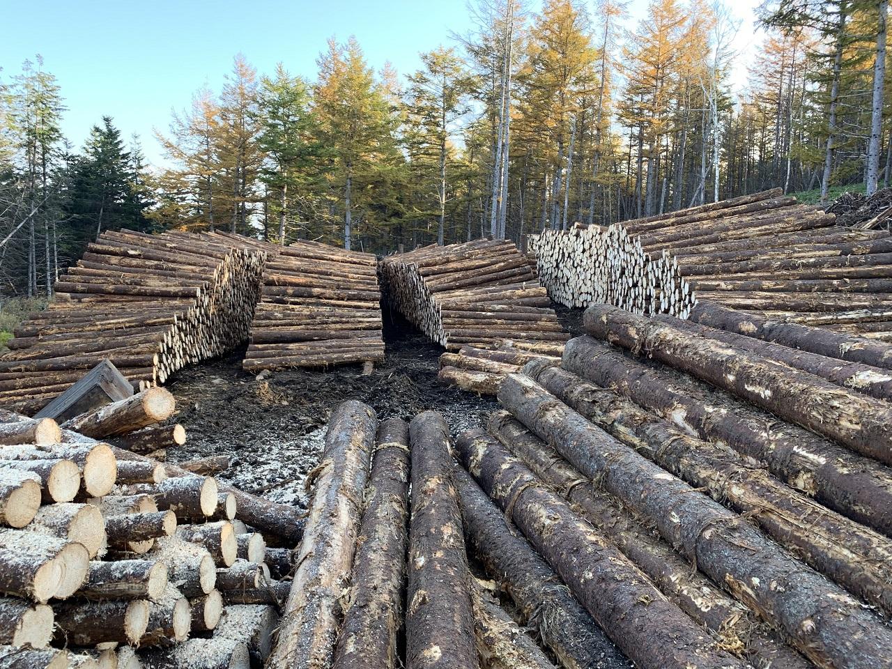 立木の価値を最大限に引き出す能力がない事業者かもしれません。
