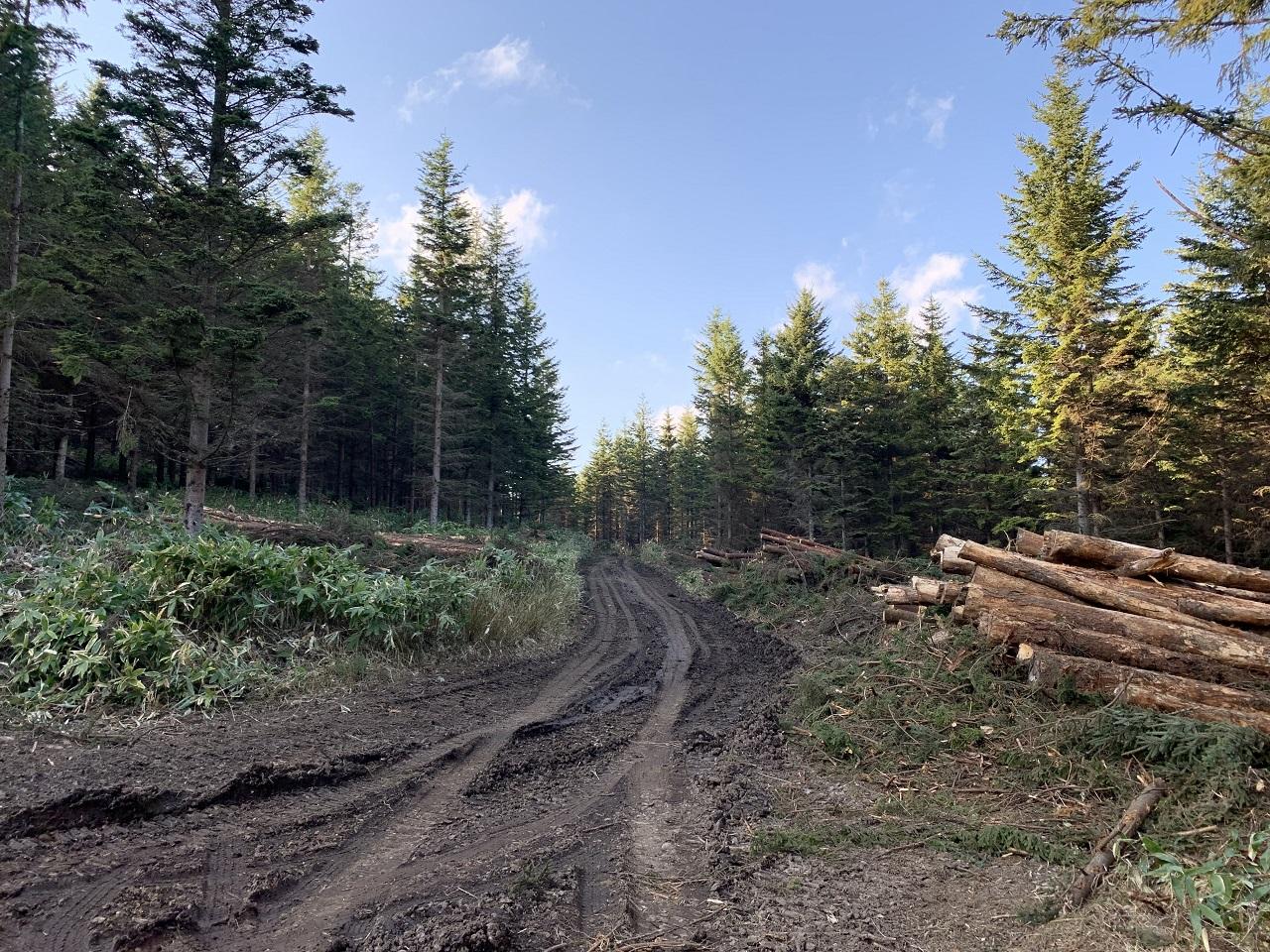 安全対策は林業や作業道のつけ方にでてきます。