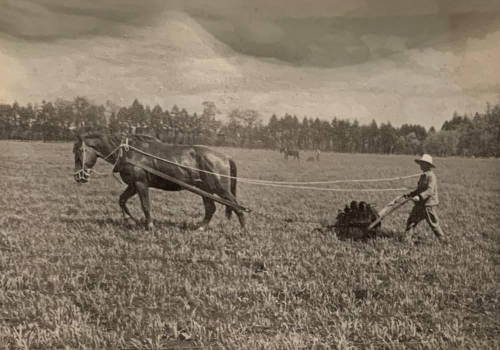 農具を引っ張る農耕馬