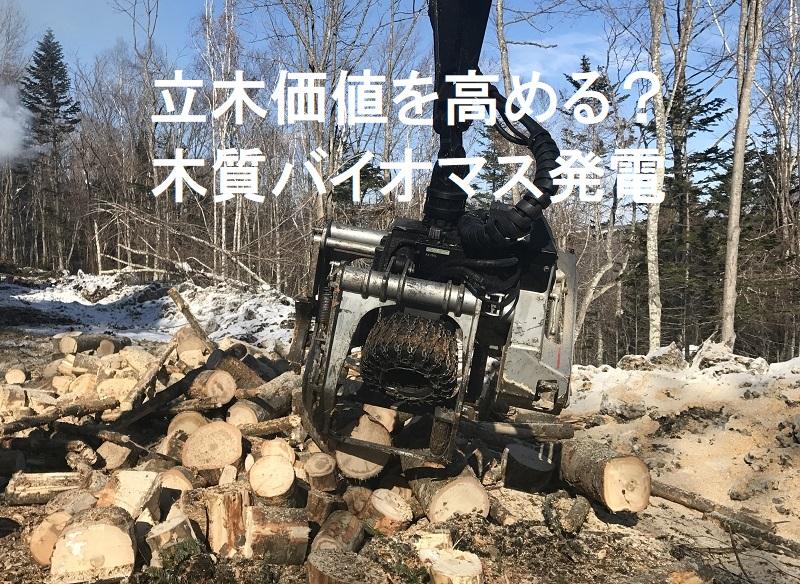 立木価値を高める?木質バイオマス発電