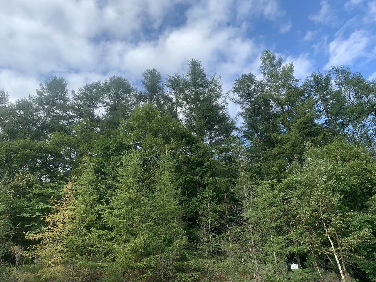 人の手で植林した山林は完全な自然ではありませんので脆弱です。