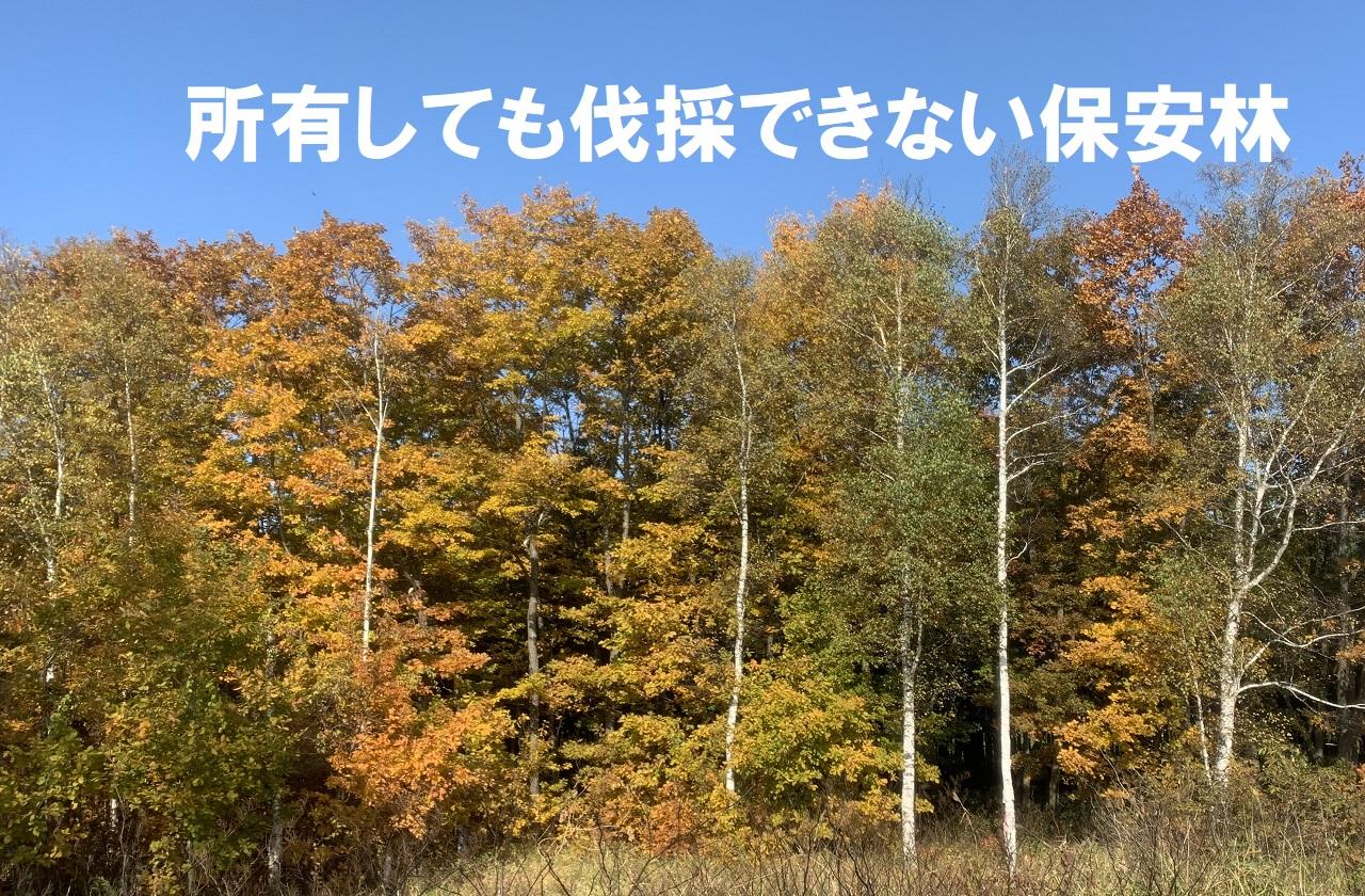 伐採できない保安林