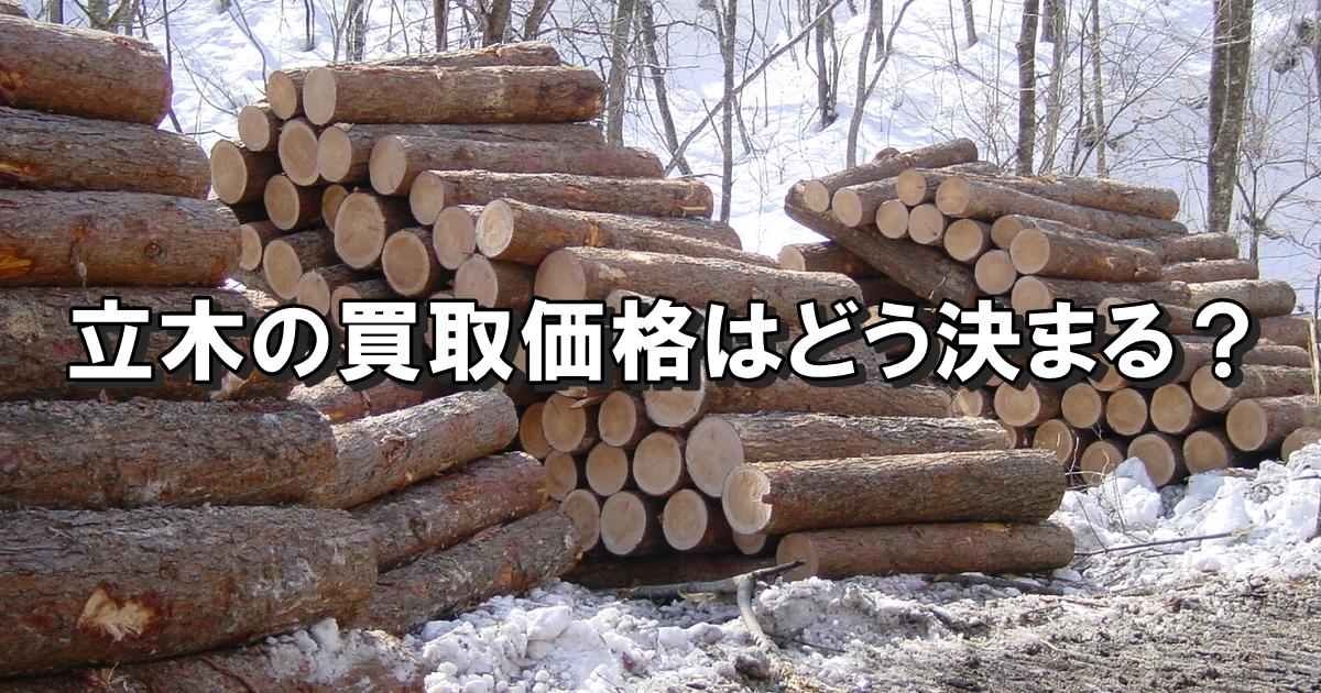 立木の買取価格はどう決まるの?