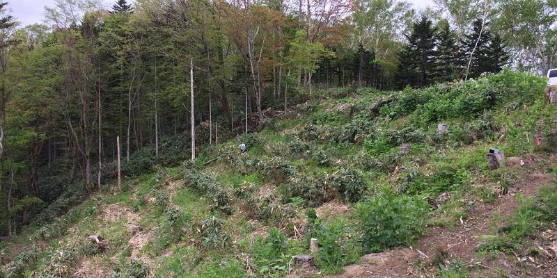 未利用木材の利用は植林を促進させてくれるといえるでしょう。