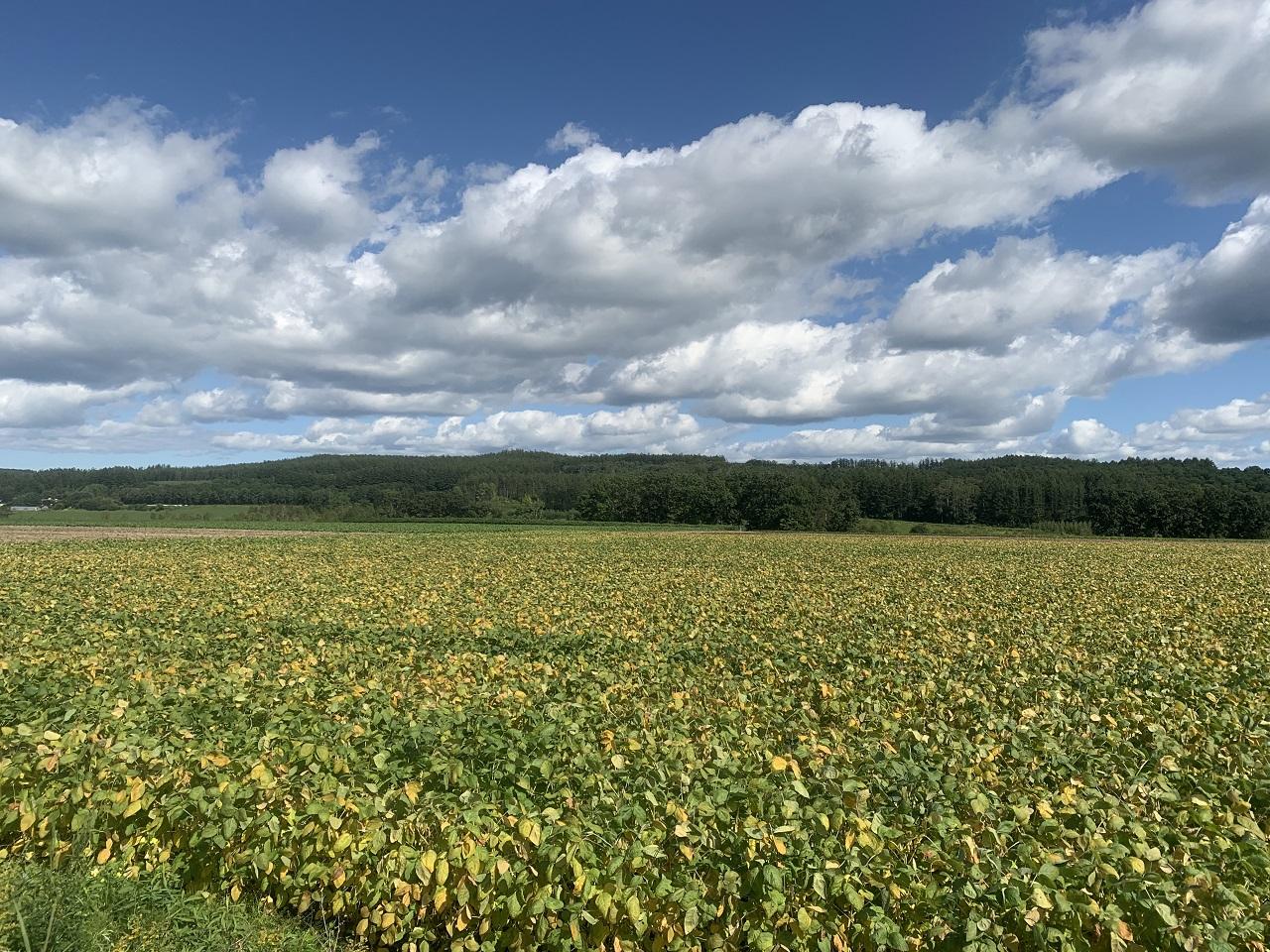 農地は作物収穫を目的に人力で農耕し、自然の草原ではない。