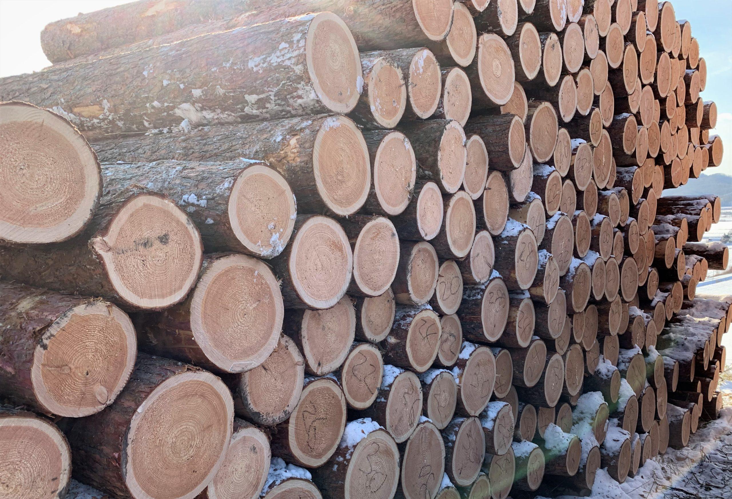 北海道で山林経営されている方のほとんどは針葉樹を生産してます。