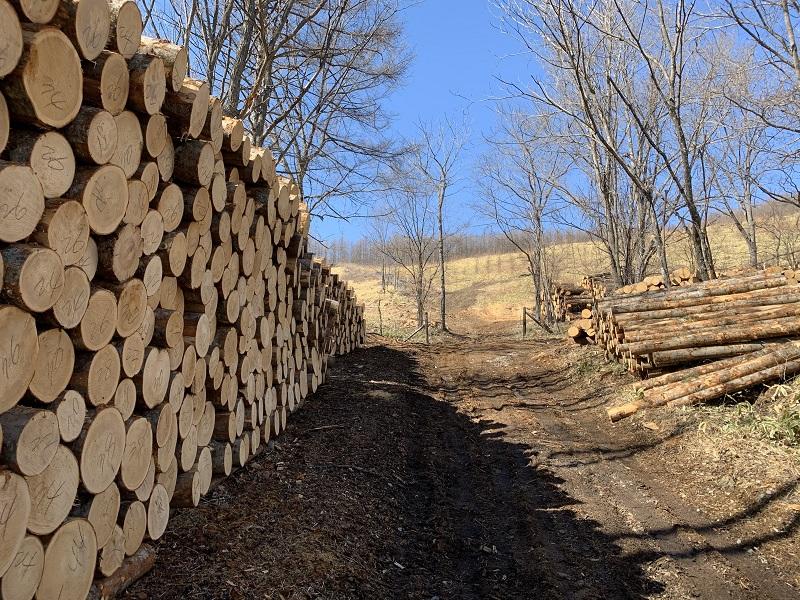 伐り出して丸太して長期間積み上げておくと、腐朽したり虫害被害のリスクがあります。